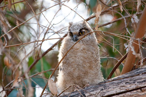 baby owl for newsletter