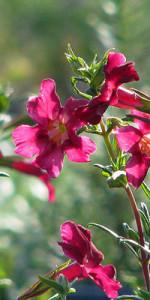 Nopalito Native Plant Nursery Gets Involved