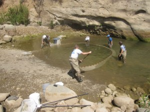 Endangered Fish Are Rescued Each Year on Ventura River Preserve