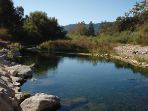 New Ventura River Steelhead Preserve Announced