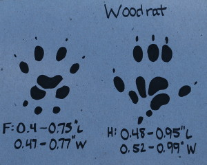 Woodrat Track
