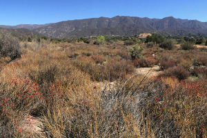 Ventura River Preserve Getting Bigger