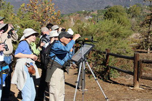 Winter Migration Bird Walk
