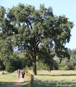 oak-on-omp