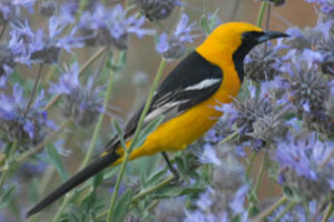 SPRING BIRD WALK WITH JESSE GRANTHAM