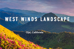 West Winds Landscape